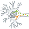 Can Chromatin Accessibility be Exploited for Axon Regeneration?